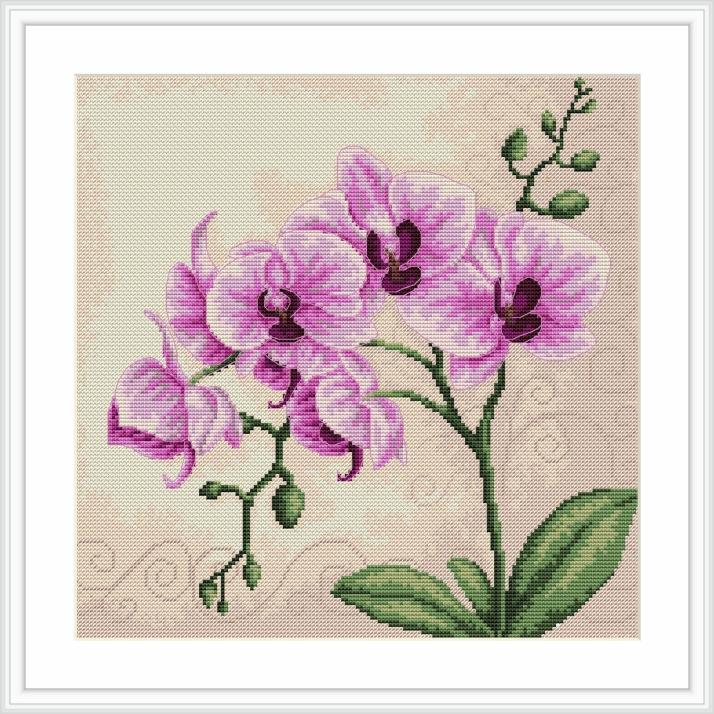 Branche d'Orchidée